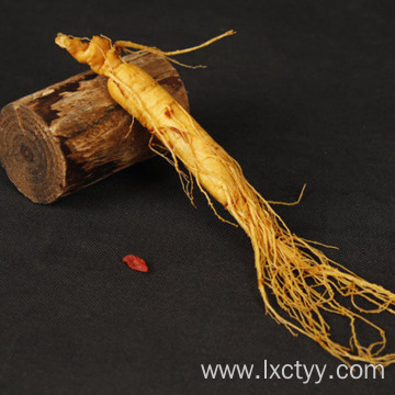 ginseng tea root food