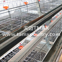 Layer cage system in Poultry