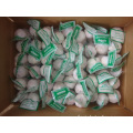 Normal Garlic packed 3pcs bag then 10kg carton