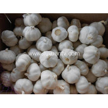Holiday sales for Normal White Garlic Fresh Garlic loosing packing supply to Chile Exporter