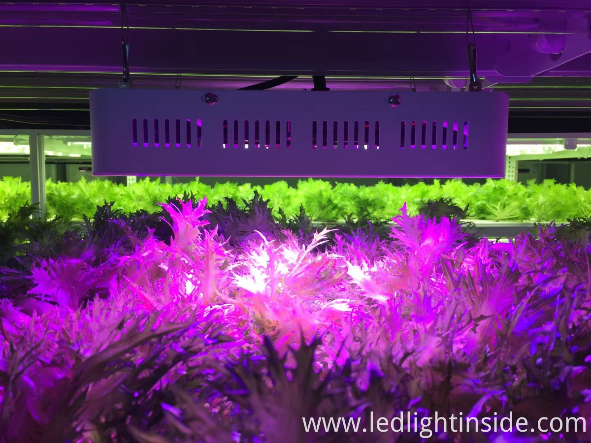 led grow lighting