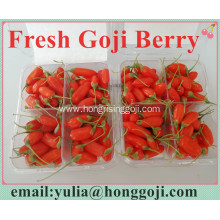 Fresh Goji Berry packed in case