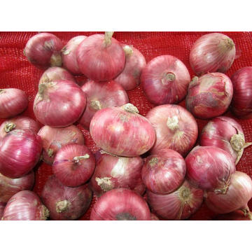 Sizes 7.0-10cm Fresh Red Onion Best Quality