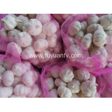 Best Quality for 5.5Cm White Garlic Wholesale price pure white garlic with good quality export to Central African Republic Exporter