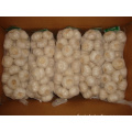 Pure white garlic packing in 1kg bag