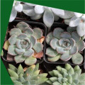 Artificial succulent potted plant