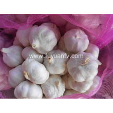 Pure white garlic 4.5-5.0cm 2018 new crop