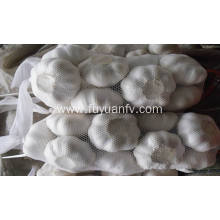 white garlic for export