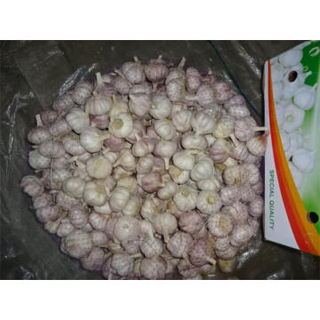 Buy Normal White Garlic Fresh