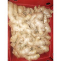 250g and up air dried ginger