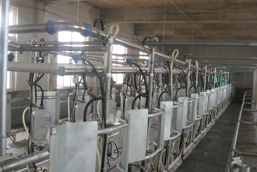 middle set milking parlor