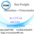 Shenzhen Port Sea Freight Shipping To Trincomalee