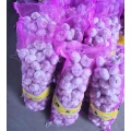 White Skin Garlics for Export