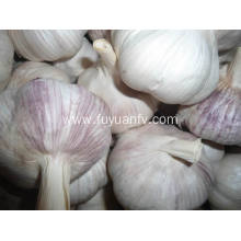 Best Price for for Dry Normal White Garlic Garlic clove garlic bread export to Egypt Exporter