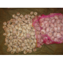 Normal white garlic 10kg mesh bag