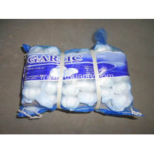 Good Quality for for Pure White Garlic 5.0-5.5Cm High quality of Pure Garlic supply to Sao Tome and Principe Exporter