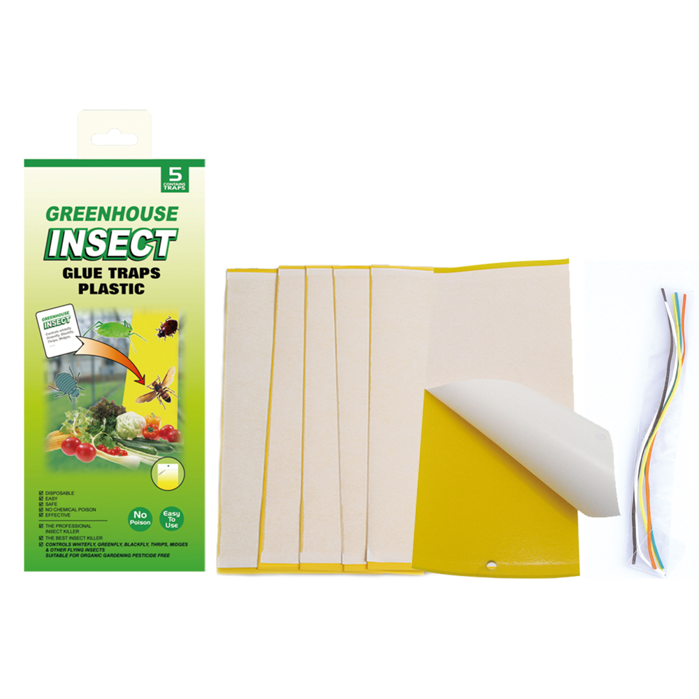 Glue Trap Insect