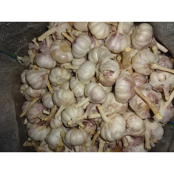 Different Packages Of New Crop Fresh Garlic 2019