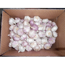 China Exporter for Normal White Garlic 5.0-5.5Cm 2018  Jinxiang  Normal white garlic export to Cook Islands Exporter