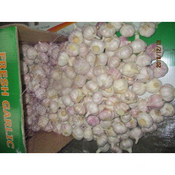 High Quality Normal Fresh Garlic
