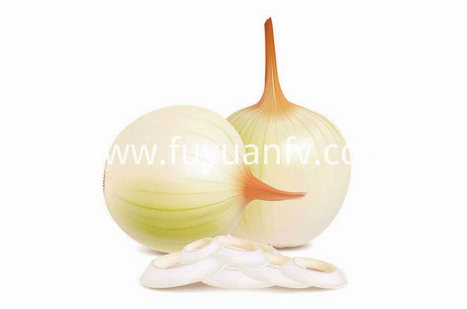 Yellow Onion 21