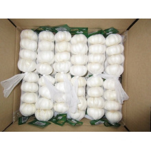 In Great Demand Jinxiang Pure White Garlic