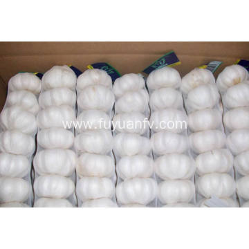 The best quality fresh pure white garlic