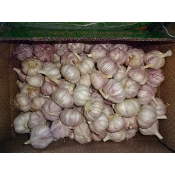 Hot Sale Normal White Garlic Fresh 2019