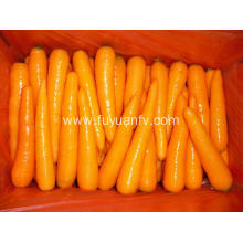2018 shandong fresh carrot