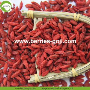 Factory Supply Nutrition Dried Chinese Wolfberry