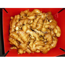 Fresh Ginger to dubai market