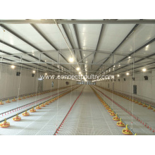 Automatic Broiler feeding line