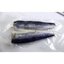China for Frozen Spanish Mackerel Fillet Frozen Spanish Mackerel Fillet supply to Gambia Importers