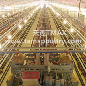 A Type Broiler Farming Equipment