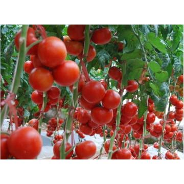 245kg tomato paste best price drum packing