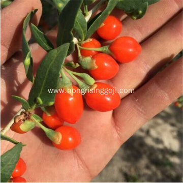 Chinese Goji Berries Price