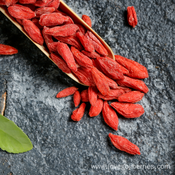 Reliable Supplier for Organic Goji Berries Ningxia Organic Goji Berry supply to Senegal Supplier