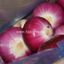 Hotsale Red Peeled Onion with good quality