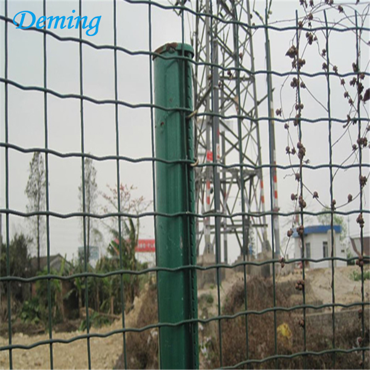 electric galvanized pvc welded wire mesh holland netting