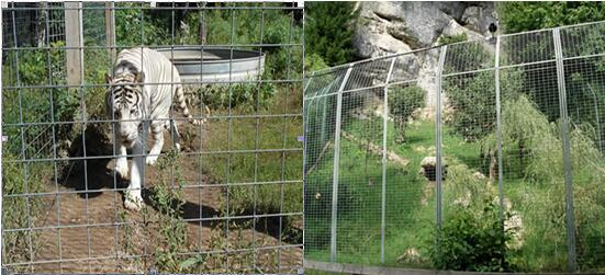 Animal Fence Stainless Steel Welded Mesh