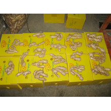 export to Algeria air dried ginger
