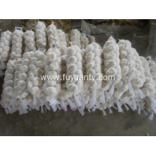 Customized for China Pure White Garlic 6.0-6.5Cm,Pure White Fresh Garlic,Fresh Normal White Garlic Supplier natural garlic small mesh bag export to Portugal Exporter