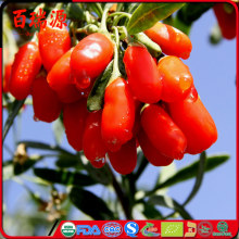 Promote skin  dried goji berry siyah