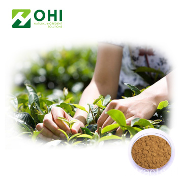 Green Tea Extract 95% EGCG 98% Polyphenols