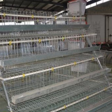 A Type Pullet Equipment