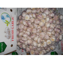 Fresh New Crop Normal White Garlic 5.0cm