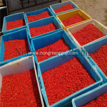Tibetan goji berries Organic wolfberries