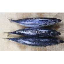 Good Quality for Frozen Main Seafood Product Sea Frozen Whole Round Mackerel export to Comoros Importers