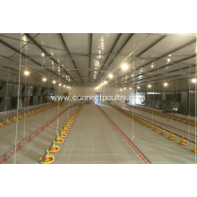 Reliable for Chicken Battery Cage Auto. chicken pan feeder export to Guyana Manufacturer