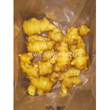 new fresh ginger export to turkey